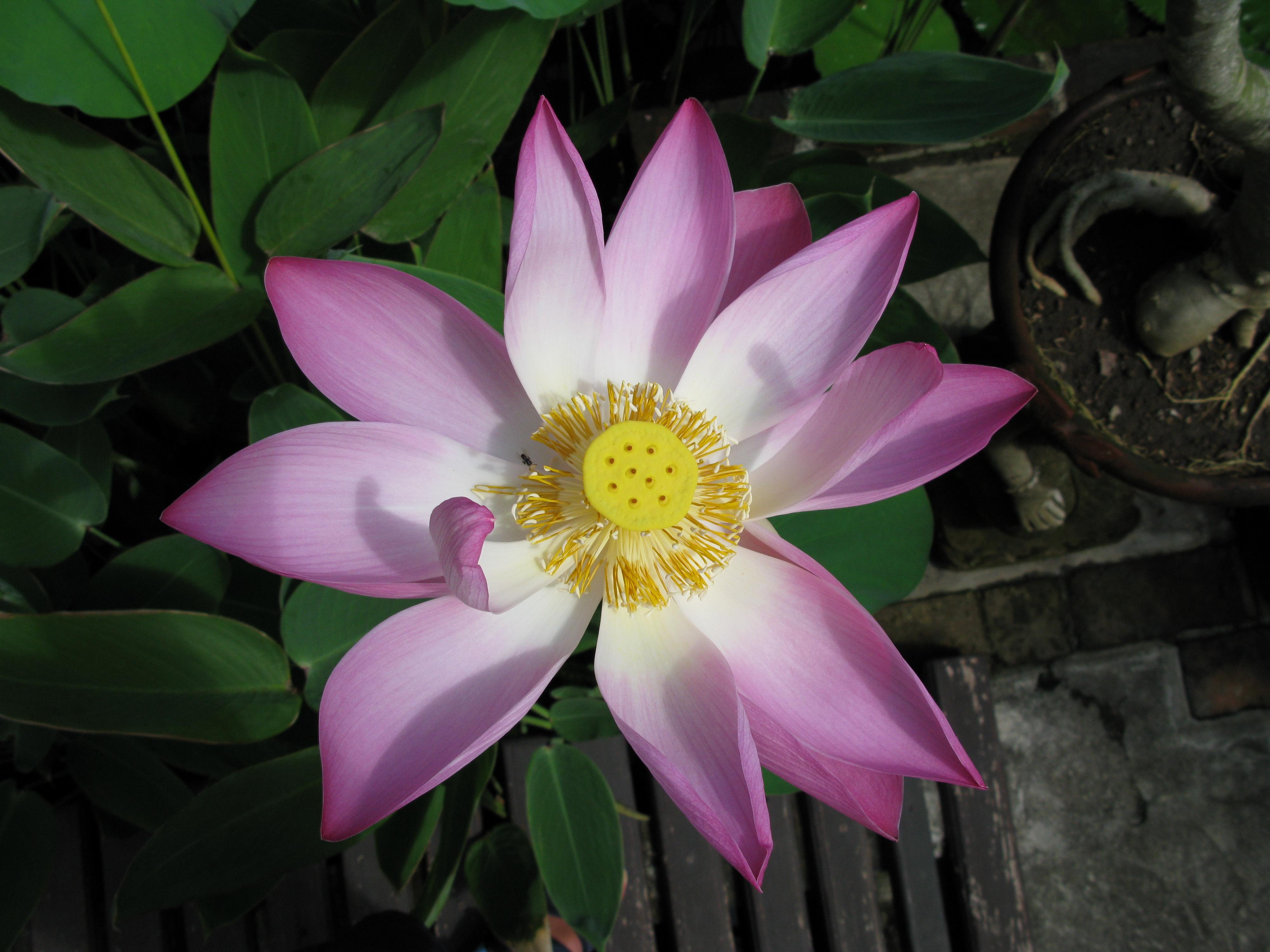 Diethild-Medina-Yoga-Blume
